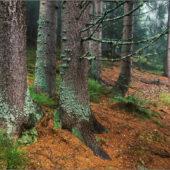 Podoby lesa