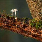 Lesny mikrosvet 2