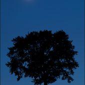 Mesiac a strom
